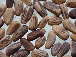 semillas de pino piñonero