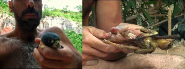 Aventura en pelotas - Halcon murcielaguero