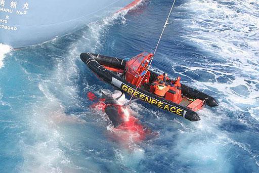 Greenpeace ballena arponeada