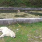 Perros muertos en el Barbanza