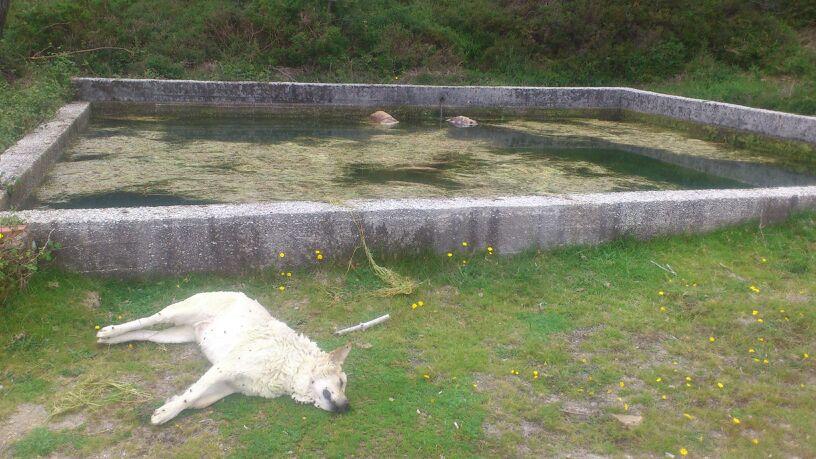 panorámica de los tres perros muertos