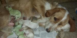 """Cachorros verdes vallisoletanos. Foto publicada por """"Laguna al dia"""" 10 /06/2014"""