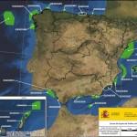 Declaradas las primeras Zonas de Especial Protección marinas para las aves en España
