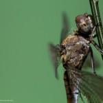 10 consejos para la fotografía macro de fauna