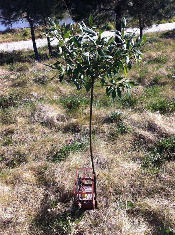 La escena de una jaula al lado del árbol. fijaos las ramitas de arriba son donde ponen el pegamento