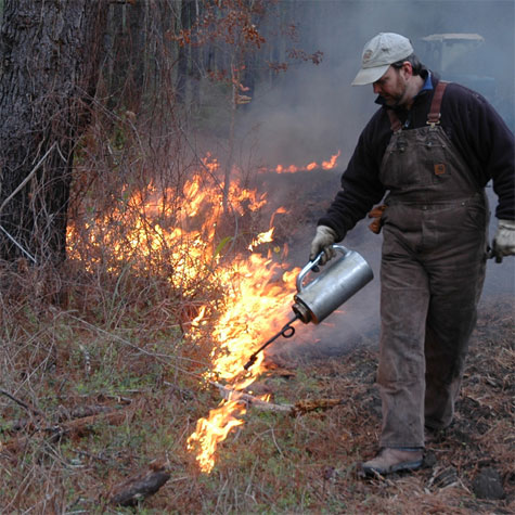 Las quemas controladas tienen los mismo efectos devastadores que las quemas ileglaes