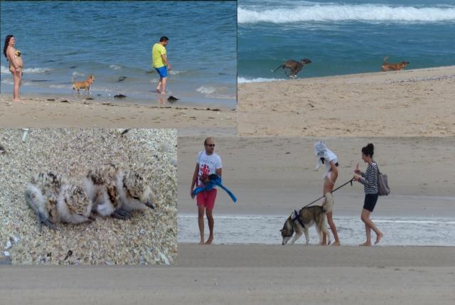 7 Perros playa Balieiros y Aguieira