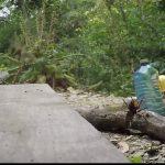 Vídeo de los ataques de una avispa asiática a una colmena