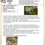 """Actividad infantil: """"Los anfibios de la sierra de la pila"""""""