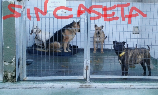 Caniles sin caseta - Perrera Mouga