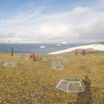 Crónica de un gallego en la Antártida