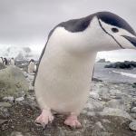 Una mañana llena de sopresas frescas en la Antártida